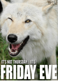 Friday, It's Friday, and Memes: IT'S NOT THURSDAY.. IT'S  FRIDAY EVE #TGIFE!