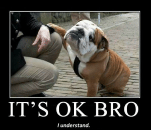 Top 10 hilarious dog memes - Marriage & Family - Home & Family ...: IT'S OK BRO  l understand. Top 10 hilarious dog memes - Marriage & Family - Home & Family ...