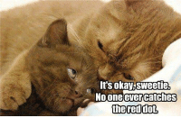 Memes, Okay, and Reds: It's okay, Sweetie  No one ever catches  the red dot,