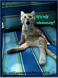 Memes, Prince, and Coffee: It's only  Wednesday?  coffee warrior Princes I know, right?