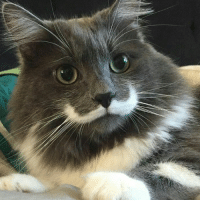 It's only Wednesday?!? #mustachecat: It's only Wednesday?!? #mustachecat