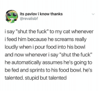 """Food, Fuck, and Dank Memes: its pavlov i know thanks  @revalisbf  i say """"shut the fuck"""" to my cat whenever  i feed him because he screams really  loudly when i pour food into his bowl  and now whenever i say """"shut the fuck""""  he automatically assumes he's going to  be fed and sprints to his food bowl. he's  talented. stupid but talented (@ship)"""