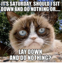 Dank, 🤖, and Down: ITS SATURDAY. SHOULDISIT  DOWN AND DONOTHING OR  LAY DOWN  AND DO NOTHING?