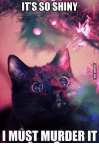 Christmas, Memes, and Christmas Tree: IT'S SO SHINY  I MUST MURDER IT My girlfriend wants a Christmas tree. This is why we can't have nice things...