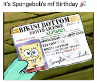 Birthday, Sex, and SpongeBob: It's Spongebob's mf Birthday  BIKINI BOTTOM  DRIVER LICENSE CLASS: S  A1356021  EXPIRES: 12-11-03  SPONGEBOB SQUAREPANTS  124 CONCH ST.  @j⑥) ·| BIKINI BOTTONI  SEX: M AIR YELLOW EYES: BI  59 today's the only day you can share this