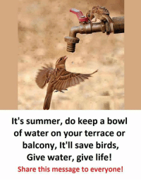Life, Summer, and Birds: It's summer, do keep a bowl  of water on your terrace or  balcony, It'll save birds,  Give water, give life!  Share this message to everyone! https://t.co/MXYJbX64iI