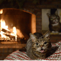 It's that time of the year, Lil BUB's Brand New Yule Log Video is here: https://youtu.be/RA2QU4srr5w: It's that time of the year, Lil BUB's Brand New Yule Log Video is here: https://youtu.be/RA2QU4srr5w