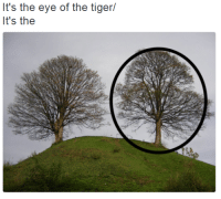 It's the eye of the tiger/  It's the me irl