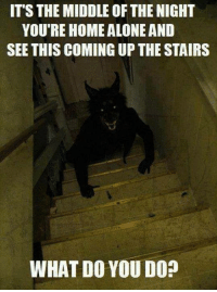 Alone Meme: ITS THE MIDDLE OF THE NIGHT  YOU'RE HOME ALONE AND  SEE THIS COMING UPTHE STAIRS  WHAT DO YOU DO?