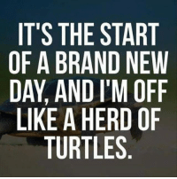 Dank, Brand New, and 🤖: IT'S THE START  OF A BRAND NEW  DAY, AND I'M OFF  LIKE A HERD OF  TURTLES #jussayin