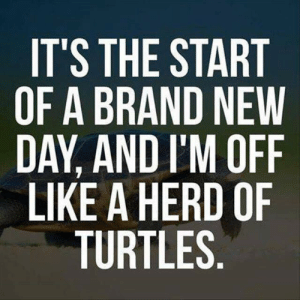new day: IT'S THE START  OF A BRAND NEW  DAY, AND I'M OFF  LIKE A HERD OF  TURTLES