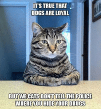 Cats, Dogs, and Drugs: IT'S TRUE THAT  DOGS ARE LOYAL  BUT WE CATS DON'T TELL THE POLICE  WHERE YOU HIDE YOUR DRUGS