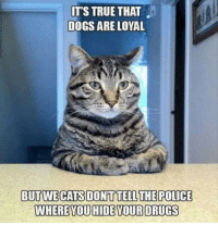Dogs, Drugs, and True: ITS TRUE THAT  DOGS ARE LOYAL  BUTWECATS DONTTELLTHEPOLICE  WHEREYOU HIDE YOUR DRUGS They attac, but they dont sniff your bagpac