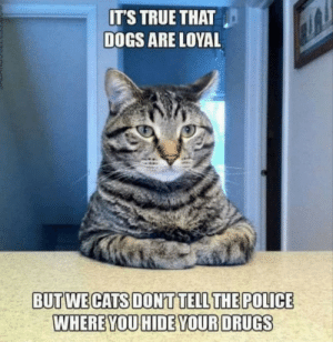 Dank, Dogs, and Drugs: ITS TRUE THAT  DOGS ARE LOYAL  BUTWECATS DONTTELLTHEPOLICE  WHEREYOU HIDE YOUR DRUGS They attac, but they dont sniff your bagpac by batmanbutawesome MORE MEMES