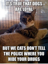 I ain't no snitch: ITS TRUETHAT DOGS  BUT WE CATS DONT TELL  THE POLICE WHERE YOU  HIDE YOUR DRUGS I ain't no snitch