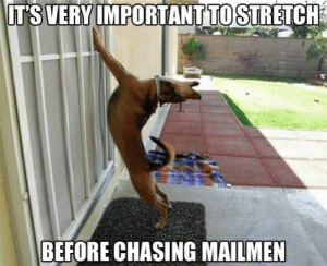 Jack Rome News: 9 Hilarious Dog Memes: IT'S VERY IMPORTANTTO STRETCH  BEFORE CHASING MAILMEN Jack Rome News: 9 Hilarious Dog Memes