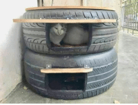 "Bad, Cats, and Memes: ""It's waterproof, it keeps them warm, it can't be easily damaged by bad people, it's a study that every animal can figure out easily, one to every neighborhood, let's make it happen this winter, this cat's house."" Post by @sokaklarin_ses"
