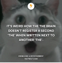 "Memes, Weird, and Knowledge: IT'S WEIRD HOW THE THE BRAIN  DOESN'T REGISTER A SECOND  THE"" WHEN WRITTEN NEXT TO  ANOTHER THE'  KNOWLEDGE ENTERTAINMENT  FACTBOLT COM 😉 Got ya! factbolt 🖐 Tag a friend!"