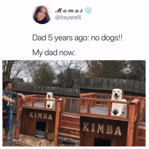 Dad, Dogs, and You: @itsyarelli  Dad b years ago: no dogs!  My dad now:  KIMBA  KIMBA You're doing great Kimba!Tw: itsyarelli