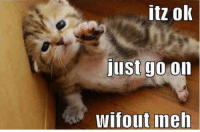 Funny Animal: itz ok  just  go on  WIfout ineh Funny Animal