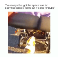 """Funny, Ted, and Space: """"I've always thought this space was for  baby necessities. Turns out it's also for pups"""" Interesting (@hilarious.ted)"""