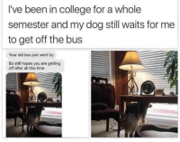 "Ass, College, and Dogs: I've been in college for a whole  semester and my dog still waits for me  to get off the bus  Your old bus just went by  Bo still hopes you are getting  off after all this time <p><a href=""http://tonydezz.tumblr.com/post/165121275625/little-bratty-sloth-we-dont-deserve-dogs-see"" class=""tumblr_blog"" target=""_blank"">tonydezz</a>:</p><blockquote> <p><a href=""http://little-bratty-sloth.tumblr.com/post/164623383349/we-dont-deserve-dogs"" class=""tumblr_blog"" target=""_blank"">little-bratty-sloth</a>:</p>  <blockquote><p>We don't deserve dogs</p></blockquote>  <p>See that's when you have to realize you gotta drop out of college and stay your ass home </p> </blockquote>"