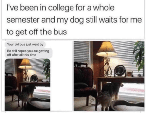 tonydezz: little-bratty-sloth:  We don't deserve dogs  See that's when you have to realize you gotta drop out of college and stay your ass home  : I've been in college for a whole  semester and my dog still waits for me  to get off the bus  Your old bus just went by  Bo still hopes you are getting  off after all this time tonydezz: little-bratty-sloth:  We don't deserve dogs  See that's when you have to realize you gotta drop out of college and stay your ass home