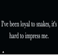 Snakes, Been, and Loyal: I've been loyal to snakes, it's  hard to impress me.