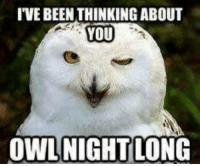 owl: I'VE BEEN THINKING ABOUT  YOU  OWL NIGHTLONG