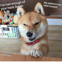 Heck this Susan tell shibo who's the good boy: I've had enough of  your heck Susan  I need to know who's the  good boy  My patience has  been booped Heck this Susan tell shibo who's the good boy