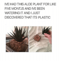 HAHAHAH . . . . . [ funny memes meme comedy comics cool textpost textposts l4l likeforlike laugh funnypictures pictures funnymemes humor post relateable lol lmao 😂 memez tumblr funnytumlr mood haha xd ]: IVE HAD THIS ALOE PLANT FOR LIKE  FIVE MONTJS AND IVE BEEN  WATERING IT AND I JUST  DISCOVERED THAT ITS PLASTIC HAHAHAH . . . . . [ funny memes meme comedy comics cool textpost textposts l4l likeforlike laugh funnypictures pictures funnymemes humor post relateable lol lmao 😂 memez tumblr funnytumlr mood haha xd ]