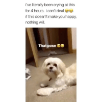Crying, Memes, and Happy: i've literally been crying at this  for 4 hours. i can't deal  if this doesn't make you happy,  nothing will.  That pose so intense! 😂 👉🏻(@bestvines pose pup) Credit: @_amboyce