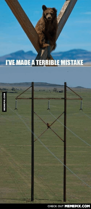 This bear made a terrible mistake.omg-humor.tumblr.com: I'VE MADE A TERRIBLE MISTAKE  CHECK OUT MEMEPIX.COM  MEMEPIX.COM This bear made a terrible mistake.omg-humor.tumblr.com