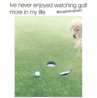 Cute, Life, and Memes: Ive never enjoyed watching golf  more in my life  @dogsbeingbasic Is golf always this cute?!? My new favorite sport. Best hole in one I've ever seen. Celebration dance 😍😍 Via @hannah___catherine