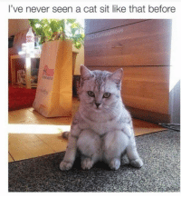 That's weird :P: I've never seen a cat sit like that before  mashlove That's weird :P