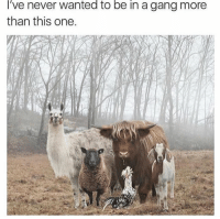 Gang, Never, and Wanted: I've  wanted  to be in a gang more  never  than this one.