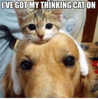 IVEGOTMYTHINKING CAT  ON I didn't know whether this was a dog or a cat meme!😂 Other account: @ilovedogmemes ___________________________________ kitten kittens kittenmemes kittypictures kitty kittymemes kittypictures cat cats catmemes catpictures funny funnykitten funnycat funnycats funnykitty funnypictures funnypicture lol adorable memes cute cutecat cutecats cutekitten cutekitty
