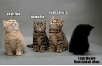 laughoutloud-club:  Some Kitties Are Different: Iwant a mouse  Iwant milk  want a fish.  Iwant the new  Black Sabbath album laughoutloud-club:  Some Kitties Are Different