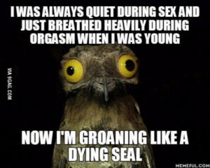 Maybe sex gets more intensive after 40, idk.: IWAS ALWAYS QUIET DURING SEX AND  JUST BREATHED HEAVILY DURING  ORGASM WHENIWAS YOUNG  NOW I'M GROANING LIKE A  DYING SEAL  MEMEFULCOM Maybe sex gets more intensive after 40, idk.