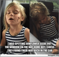Memes, Guess, and Today: IWAS SPITTING SUNFLOWERSEEDS OUT  THE WINDOWONTHE WAYHOME BUTI GUESS  THEY FOUND THEIR WAY,BACKIN THE CAR  funnygram.info 65 Of Today's Freshest Pics And Memes