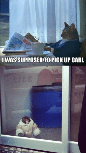 carl: IWAS SUPPOSED-TOPICK UP CARL  STEE