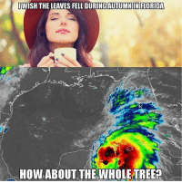 Dank, Memes, and Florida: IWISH THE LEAVES FELL DURING AUTUMN IN FLORIDA  HOW ABOUT THE WHOLE TREE Top 24 Funniest Dank Memes Try Not To Laugh