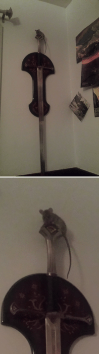 electronictragedy:  arahir:  arahir: all night long the sword on the wall above my bed has been rattling and i finally woke up all the way and went wtf and turned on the light and found this.  @ those of you saying this is cute… that's a feral rat. a feral rat hovered over my head watching me sleep for three hours while trying to figure out how to assassinate me with a longsword. thanks.    While you slept, He studied the blade  : IyF  IP electronictragedy:  arahir:  arahir: all night long the sword on the wall above my bed has been rattling and i finally woke up all the way and went wtf and turned on the light and found this.  @ those of you saying this is cute… that's a feral rat. a feral rat hovered over my head watching me sleep for three hours while trying to figure out how to assassinate me with a longsword. thanks.    While you slept, He studied the blade