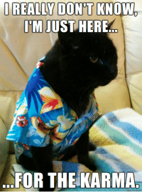 <p>Catitude is caustic, requires karma mediation.</p>: J REALLY DON'T KNOW  IMJUSTHERE  FOR THE KARMA <p>Catitude is caustic, requires karma mediation.</p>