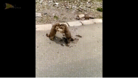 When groundhogs take Groundhog Day way to seriously.: J When groundhogs take Groundhog Day way to seriously.