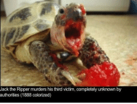 It seems that you guys really like my turtle memes: Jack the Ripper murders his third victim, completely unknown by  authorities (1888 colorized) It seems that you guys really like my turtle memes