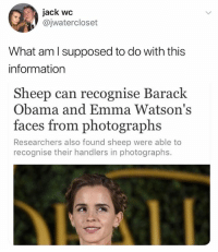 "Obama, Barack Obama, and Information: jack wc  @jwatercloset  What aml supposed to do with this  information  Sheep can recognise Barack  Obama and Emma Watson's  faces from photographs  Researchers also found sheep were able to  recognise their handlers in photographs. (Barack & Emma are in a criminal lineup) Cop: Number 4 step forward Emma: *steps forward and shoots an evil look towards the two-way mirror* ""You haven't seen the last of me, Jeremy."" The sheep on the other side: *faints*"