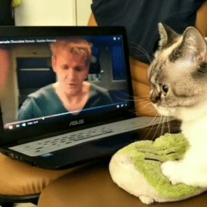 Gordon Ramsay, Tumblr, and Best: jackmeister: thenatsdorf: Making biscuits with Gordon Ramsay.  This is it. The best video on the web.