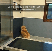 Memes, 🤖, and Strategy: Jack's strategy at the vet: If I cant see  you, you can't see me 😂lol