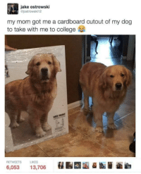 College, Love, and Mom: jake ostrowski  @jostrowski12  my mom got me a cardboard cutout of my dog  to take with me to college  INT  RETWEETS  LIKES  6,053 13,706 <p>I would love a cardboard cutout of my dog</p>